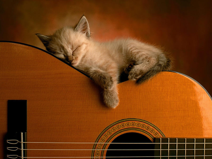 Cat by msaeedd