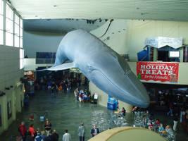 Aquarium of the Pacific 13