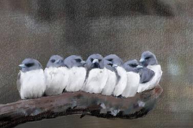 Project6 Birds 2