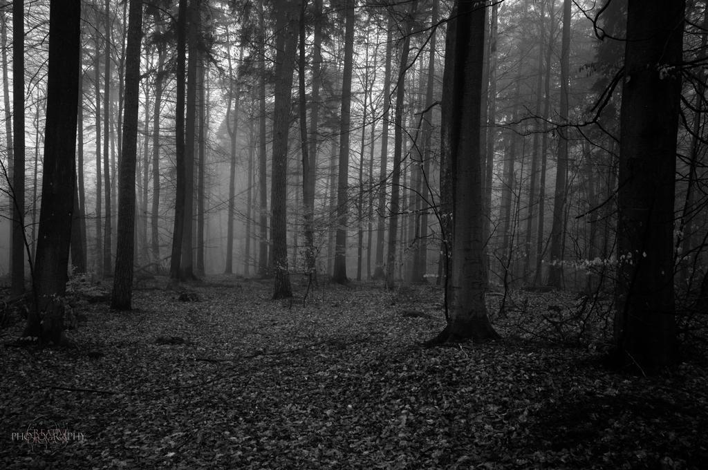 Gloomy Woods by Creative--Dragon
