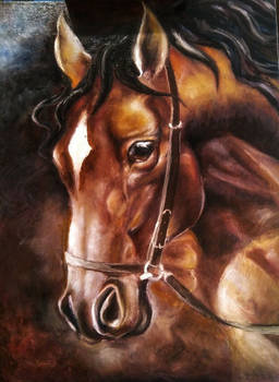 Horse Portrait WIP 2
