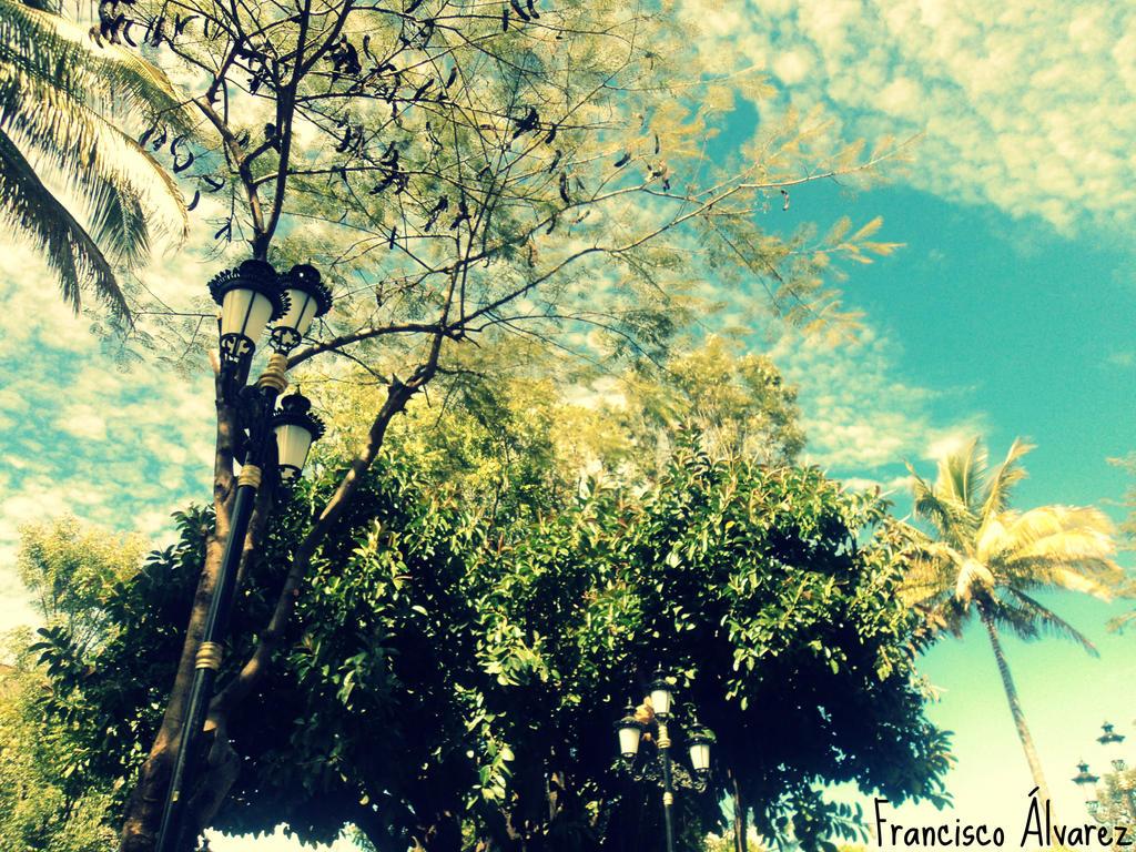 Arboles Plaza De Los Reyes Michoacan by LosReyesMichoacan