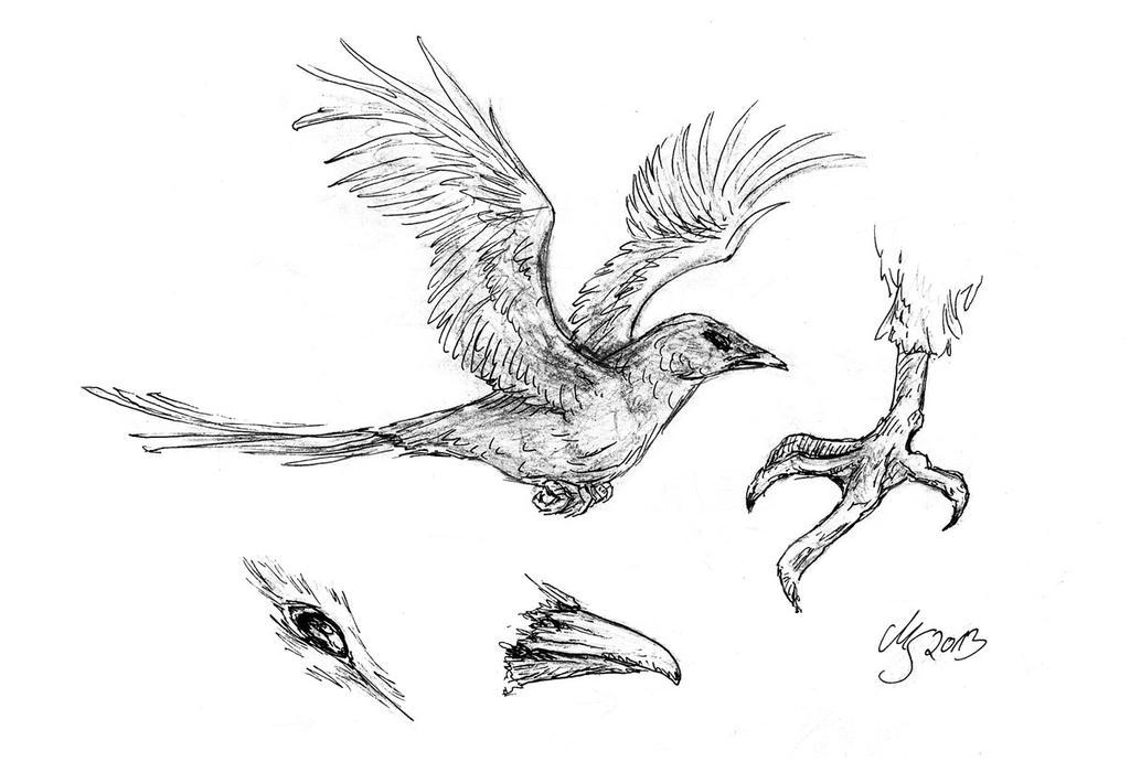 Bird by SarembaArt