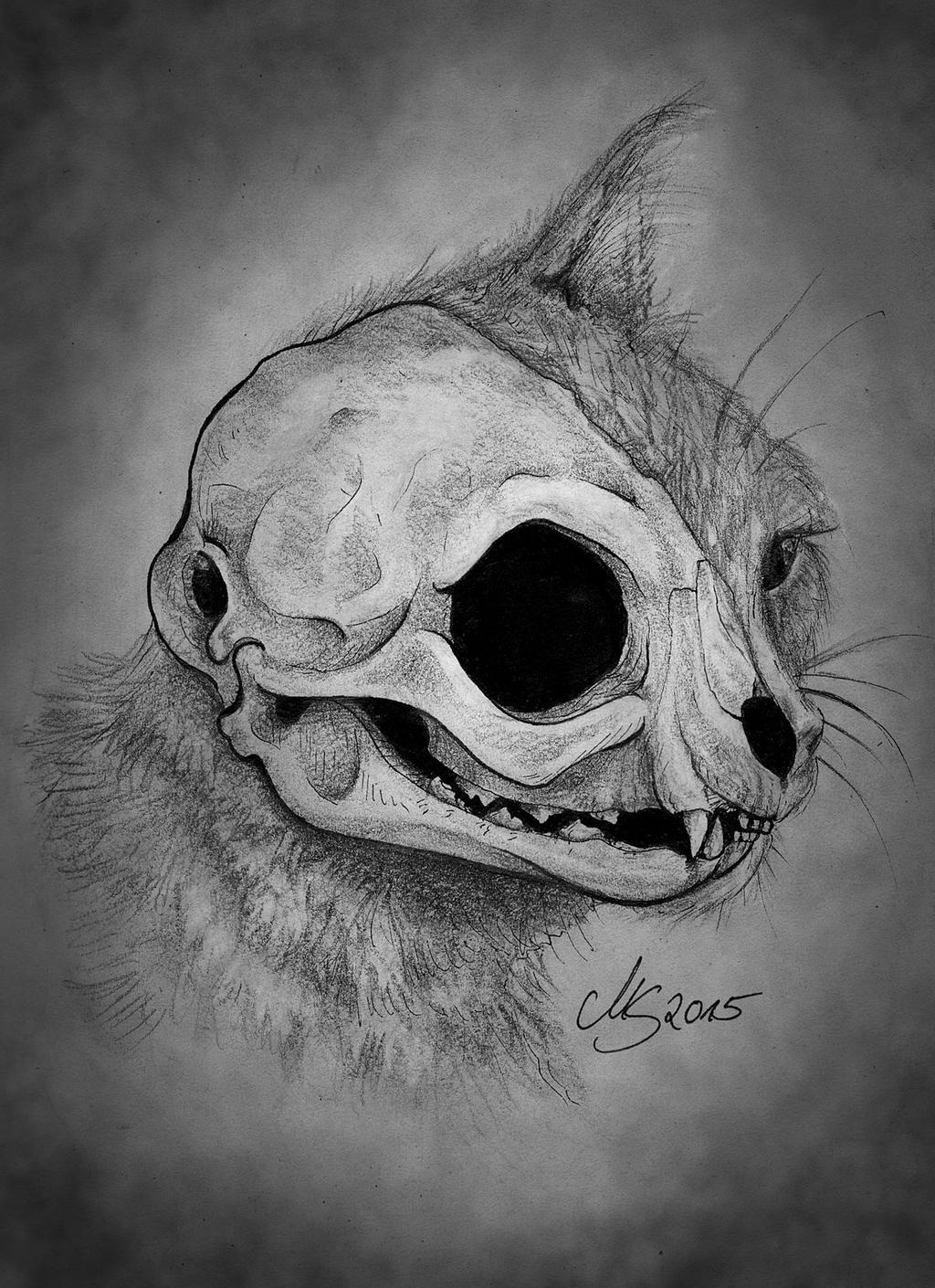 Cat\'s Skull by SarembaArt on DeviantArt
