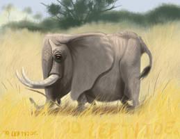 square elephant by leftyjoe