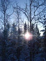 Sunlight by ReaderWriter
