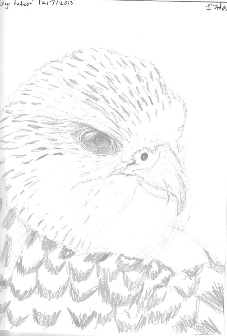 Gyr falcon by ImmyWimmy1