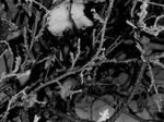 black and white winter theme 3