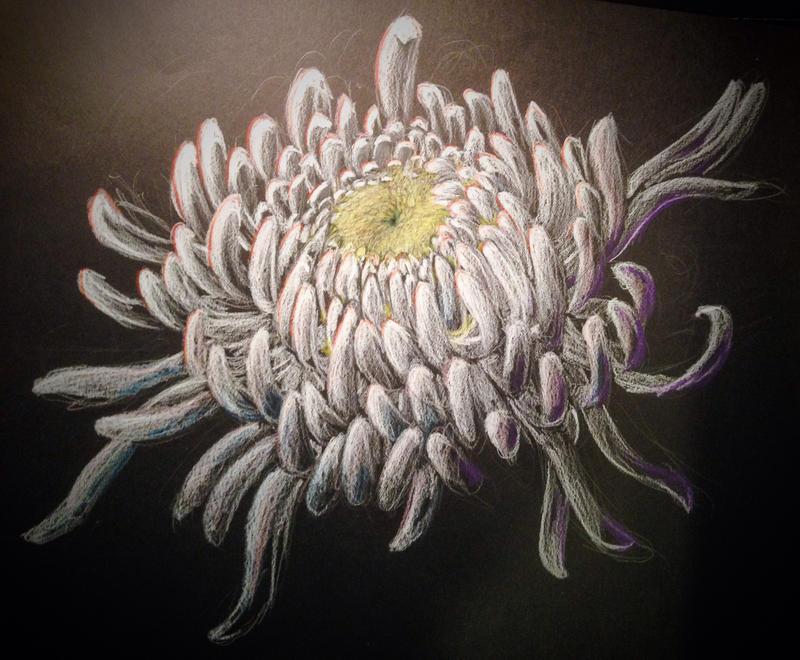Chrysanthemum by Yiliana