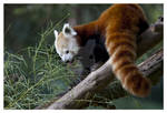 NomNom Time for Red Panda