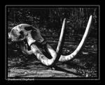 Shadowed Elephant