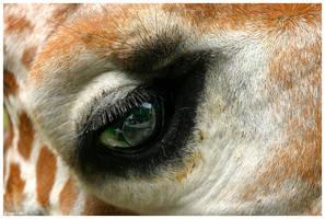 Through Your Eyes by ewm