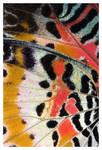 Leopard Lacewing II