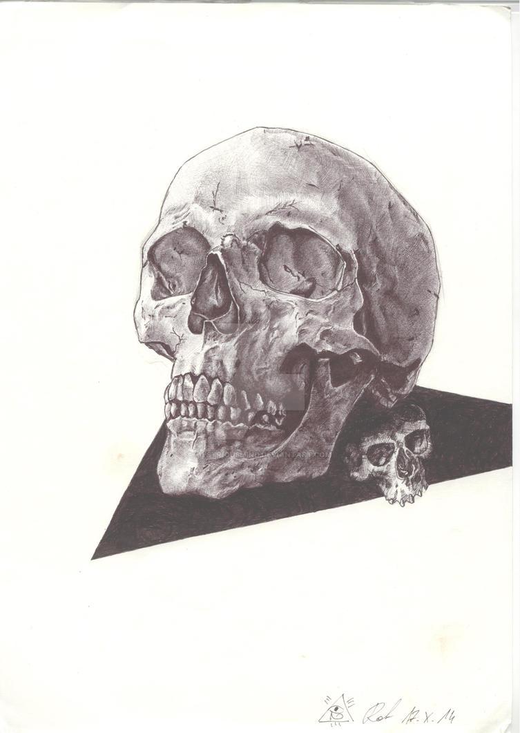 Skull study by MystriousMind