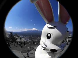 Fuji Rabbit