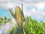 Corn (word no. 107)