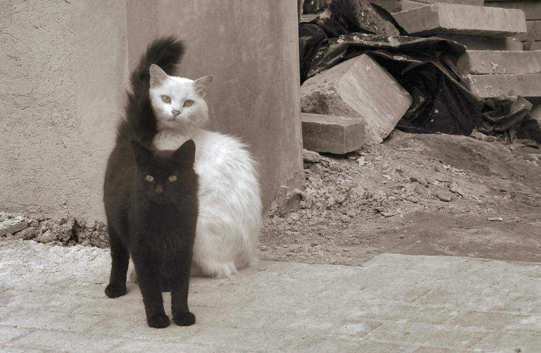 Image Seo All 2 White Cat Post 21