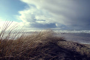 Winter Dune Grass