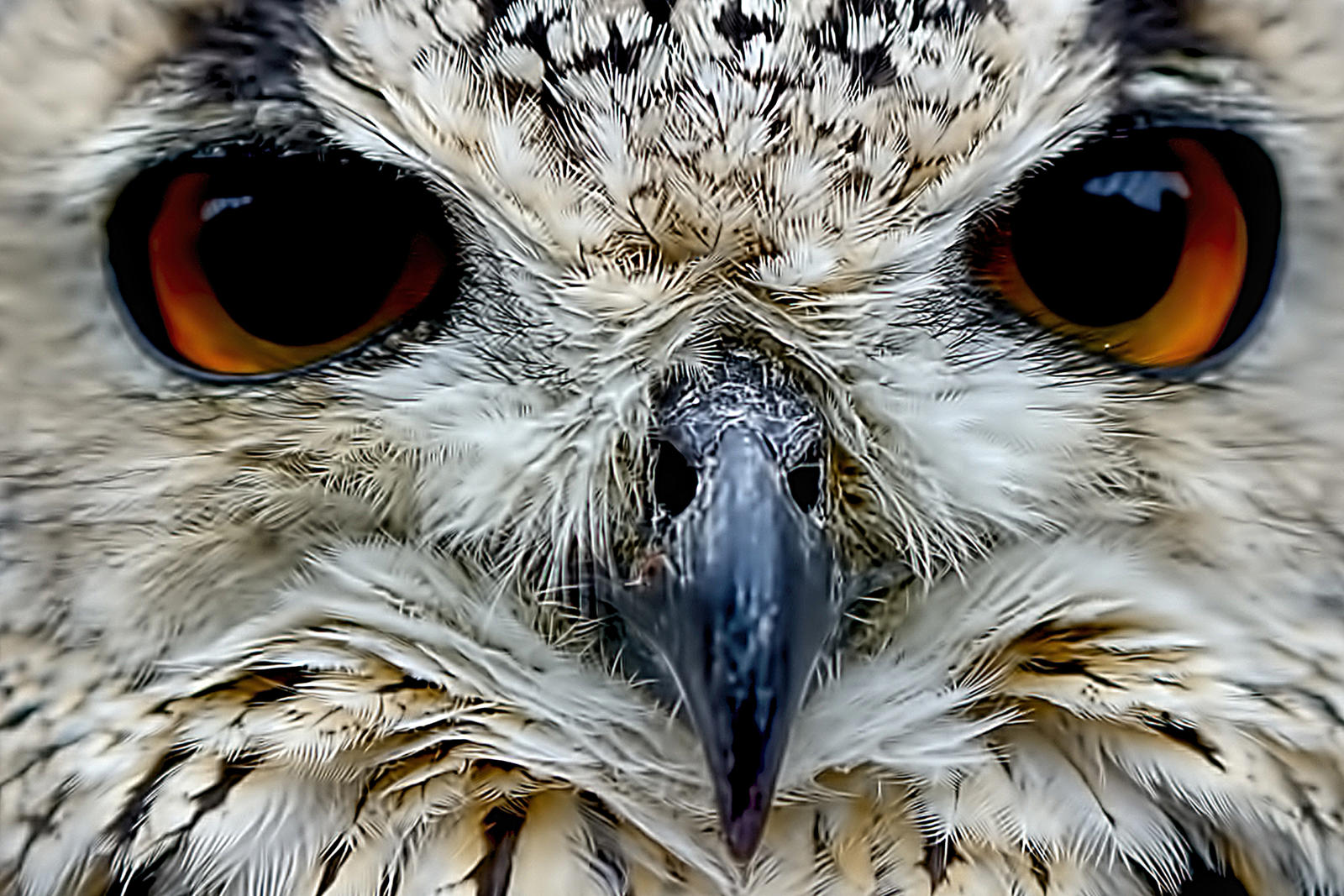 Bengali Eagle Owl by StephenJohnSmith