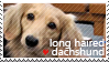long haired dachshund -Stamp by l---Skipper---l