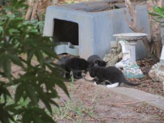 kittens 12