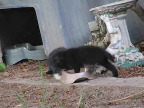 kittens 9