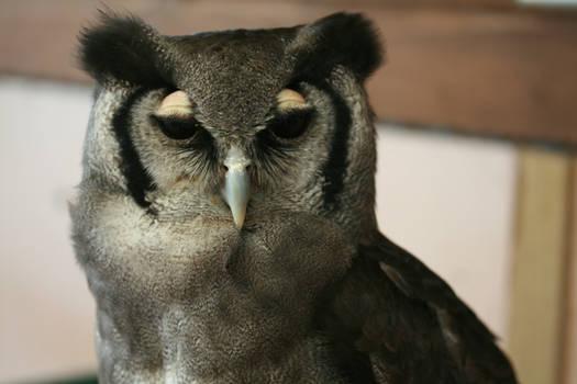 Owl 2.1