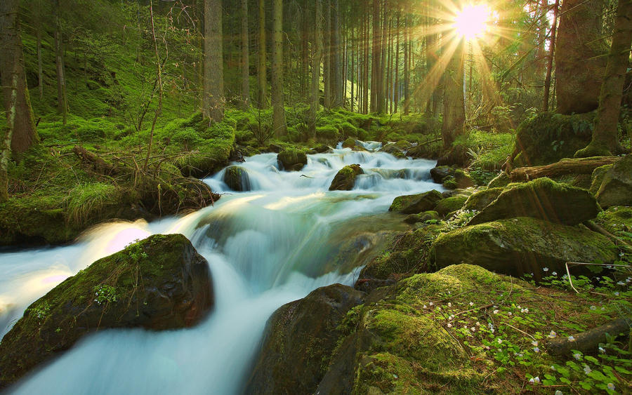 nature forest and sunlight by stardeht