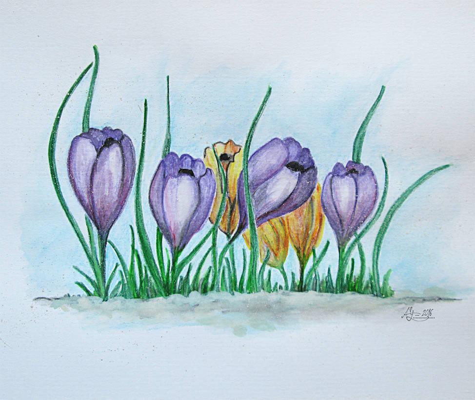 Crocuses spring by Alena-48
