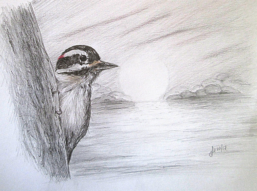 hairy woodpecker by alena48 on deviantart