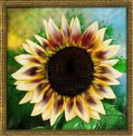 Sunflower by Alena-48