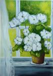 IWhite geraniums on the window by Alena-48