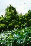 Summer glade