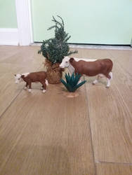 my Schleich hereford bovine figures