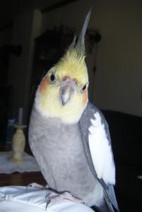 Chrissijulius's Profile Picture