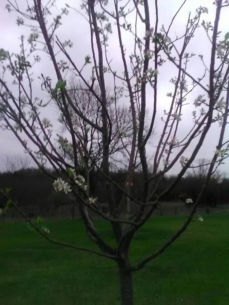 spring again by NightmareGal755