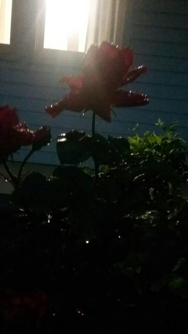 midnight rose by NightmareGal755