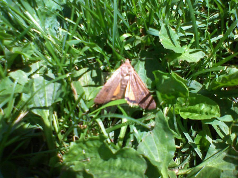 moth by jenna-aw