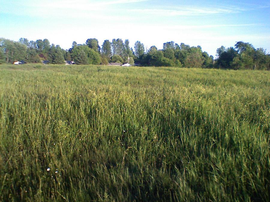 field by jenna-aw