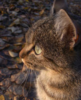 Autumn kitteh profile by 7DS7