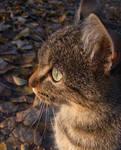 Autumn kitteh profile