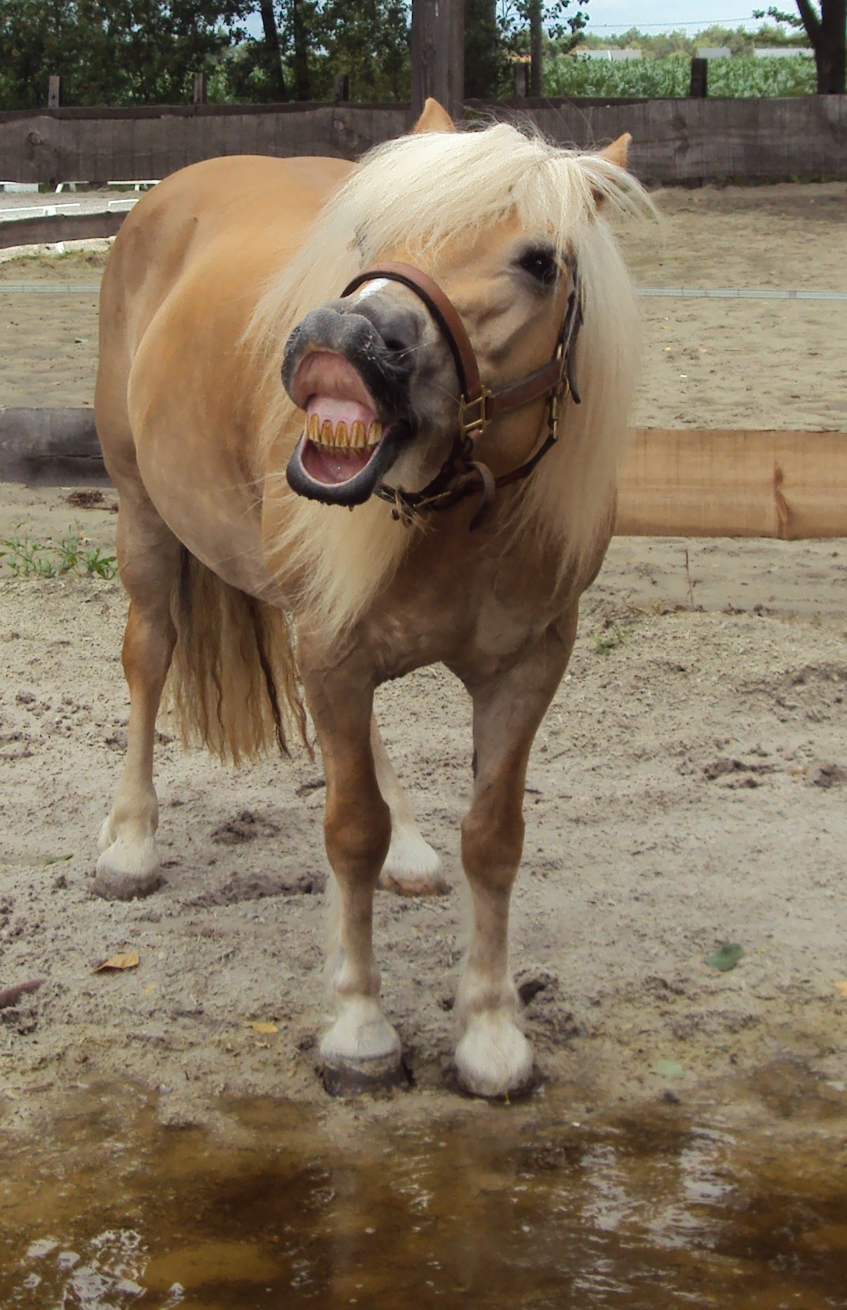 funny face by astridlover