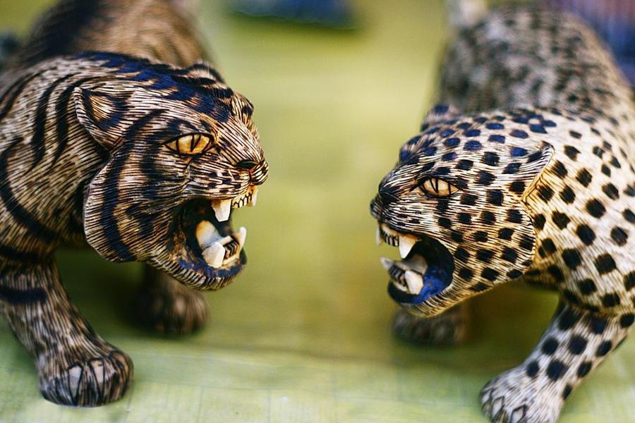 Cheetah vs lion vs tiger - photo#17