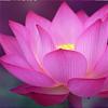Pink Flower Icon by dontforgetthemilk