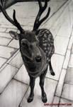 Todaiji Deer