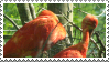 Scarlet Ibis by MorbidPirate-Stamps