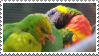 Rainbow Lorees by MorbidPirate-Stamps
