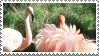 Flamingoes by MorbidPirate-Stamps