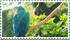 Macaw by MorbidPirate-Stamps