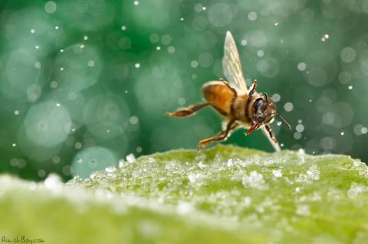 Do the bee dance!